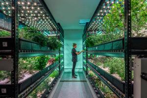 I vantaggi dell'illuminazione a LED nelle serre