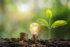 Energie rinnovabili: normativa, incentivi, fonti